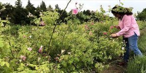 Edirne'de 'gül tarımı' atağı