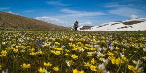 Anadolu 'endemik' tür cenneti