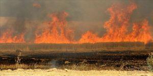 DEAŞ Irak'ta tarım arazilerini ateşe veriyor