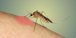 Sivri sineklerden kurtulmanın doğal yolları