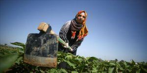 Gazzeli kadınlar İsrail sınırında patates yetiştiriyor