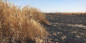 40 bin dönüm tarım arazisi kül oldu