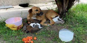 Cami avlusunda yavrulayan köpeğe imam sahip çıktı