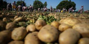 Türkiye patates üretiminde dünyada ilk 10'da