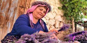 Kuyucaklı kadınların ekmek kapısı 'lavanta'