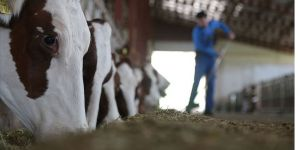 Hayvancılıkta verimli üretime yüksek destek