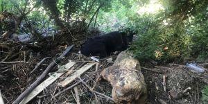 Düzce'de ekipler hayvanların da imdadına yetişiyor