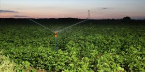Gece sulamasıyla suda tasarruf, üründe verim artışı sağlandı