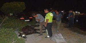 Otomobillerin çarptığı 3 safkan Arap atı telef oldu
