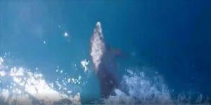 İskenderun Körfezi'nde yunuslar teknelerle yarıştı