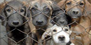 Barınaktaki 'hayvanların öldürüldüğü' iddiasına soruşturma