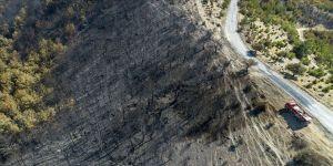 İzmir'deki orman yangınının nedeni araştırılıyor