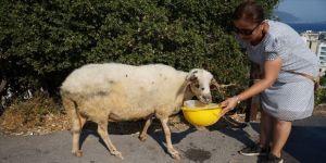 Temizlik işçileri çöp toplarken koyun buldu