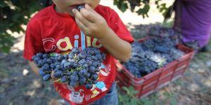 Kalecik'te üzüm festivali düzenlenecek