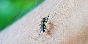 Sivrisinekler erkekleri daha çok ısırıyor'