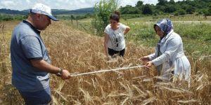 Çiftçilere hibeli tohum desteği