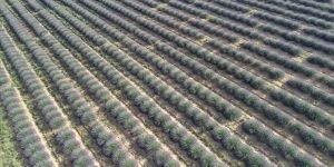 Çiftçilere 200 milyon metrekare Hazine arazisi kiraya verilecek