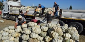 'İyi Tarım Uygulaması' kabak üretimini yüzde 50 artırdı