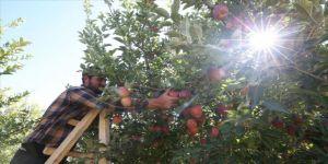 Yahyalı elmasında verim arttı, çiftçinin yüzü güldü