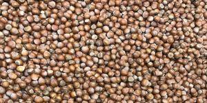 'Fındıkta ihracat, sezonun ilk ayında geçen yıla göre yüzde 75 arttı'