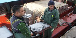 Balıkçı tekneleri hamsi dolu ambarlarla limana dönüyor