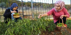 Üniversiteliler ihtiyaç sahipleri için de sebze yetiştiriyor