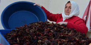 Şanlıurfalı kadınlar isotu bilimsel yöntemlerle üretiyor