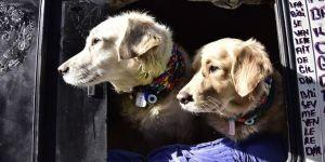 Belediyelere 11 yılda 31,8 milyon liralık sokak hayvanları desteği