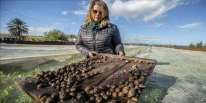 Tunuslu kadın girişimci alışılmışın dışına çıkarak 'salyangoz yetiştiriciliği' yapıyor