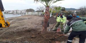 Sahil Parkı'na yeni palmiyeler