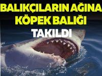 Balıkçıların Ağına Köpekbalığı Takıldı