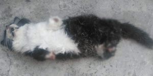 Kedinin dört ayağını da kestiler