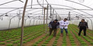 Büyükşehir'den çiftçilere yüzde 50 hibeli sera desteği