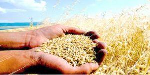 Yeni yıla buğday ve şeker ithalatları, gıda fiyatlarındaki artışlarla giriyoruz