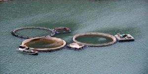 Gümüşhane'de balık üretiminden ekonomiye 90 milyon liralık katkı
