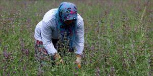 Hazine arazilerinin kiralanmasında kadın ve genç girişimlere öncelik