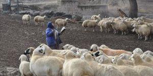 İlkokul mezunu kadın çobanın 'tek dostu' kitapları