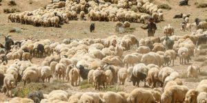 Küçükbaş hayvancılık eylem planı toplantısı Antalya'da yapılacak