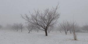 Beyaza bürünen kayısı bahçelerinde kış manzarası