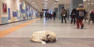 Sokak hayvanları metro istasyonlarına sığındı