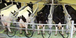 Toplanan inek sütü miktarı aralıkta arttı