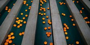 Rusya'ya en çok mandarin ihraç edildi