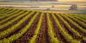 Bosna Hersek Anayasa Mahkemesinin 'tarım arazileri' kararı ülkeyi gerdi
