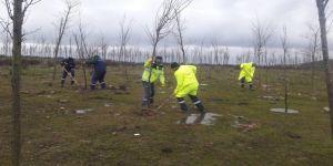 Rehabilitasyon alanında ağaçlandırma