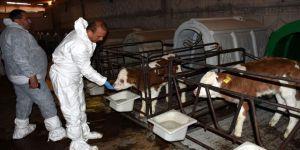 Aksaray süt üretiminde markalaşmak istiyor