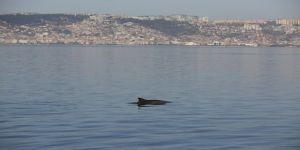 Yunuslardan, sahilde görsel şölen