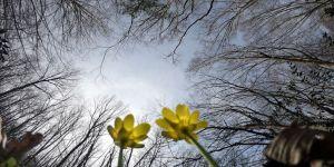 İğneada Longoz Ormanları her mevsim ayrı güzel