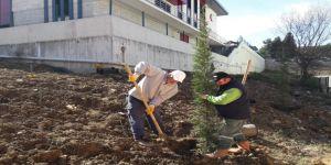 İtfaiye Binası çevresinde ağaçlandırma
