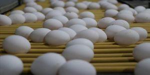Türkiye'den Körfez ülkelerine aylık 4 milyon dolarlık yumurta ihracatı
