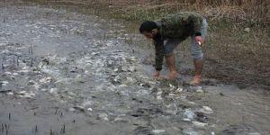 Bursa'da baraj sularının çekildiği tarladan balık topladılar